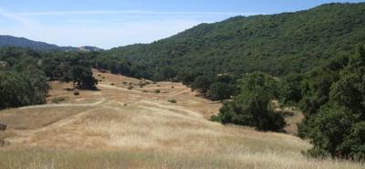 Walt Ranch