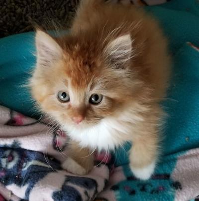Adopt a Pet | Sonic