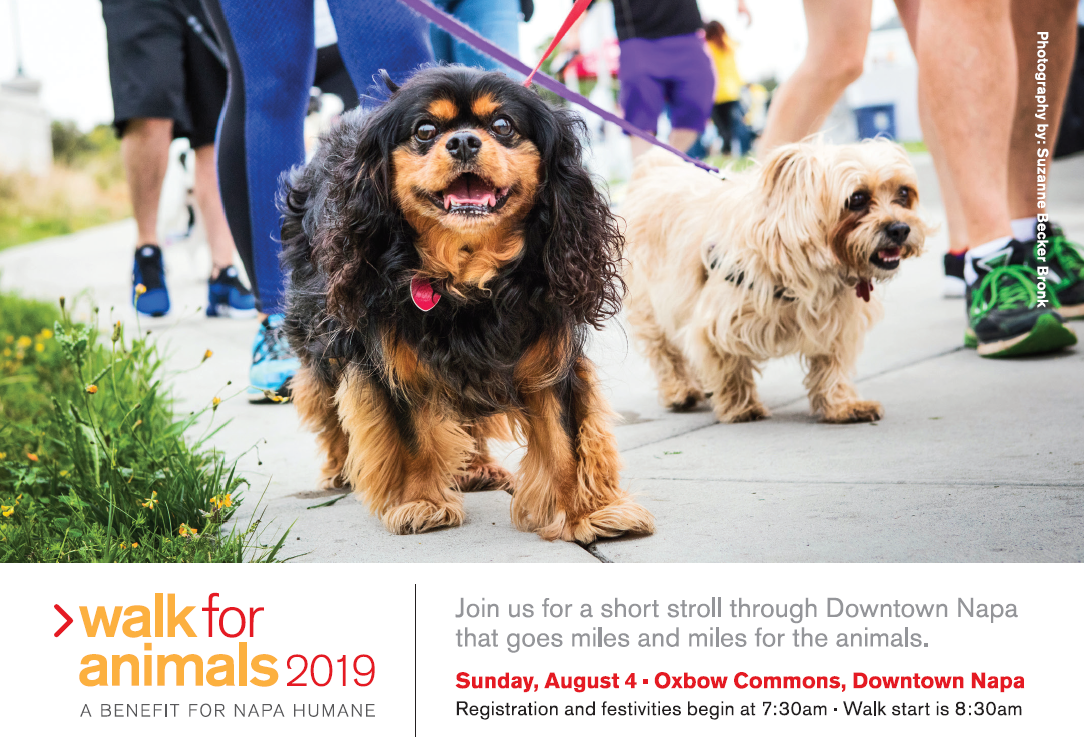 Walk for Animals 2019