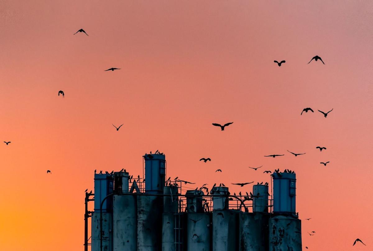 Secret life of crows
