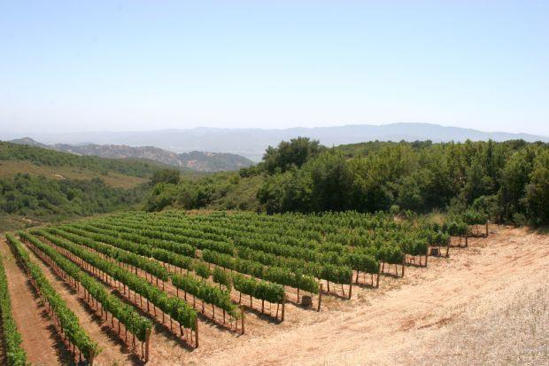 Napa Valley vineyard (copy)