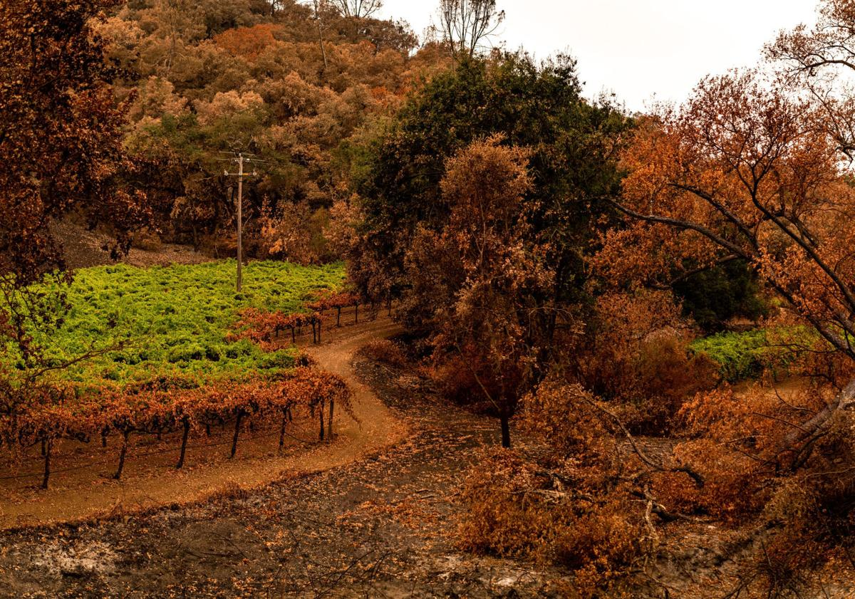 Vineyard fire Napa