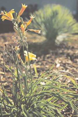 Napa shows off wonders of water-wise landscaping