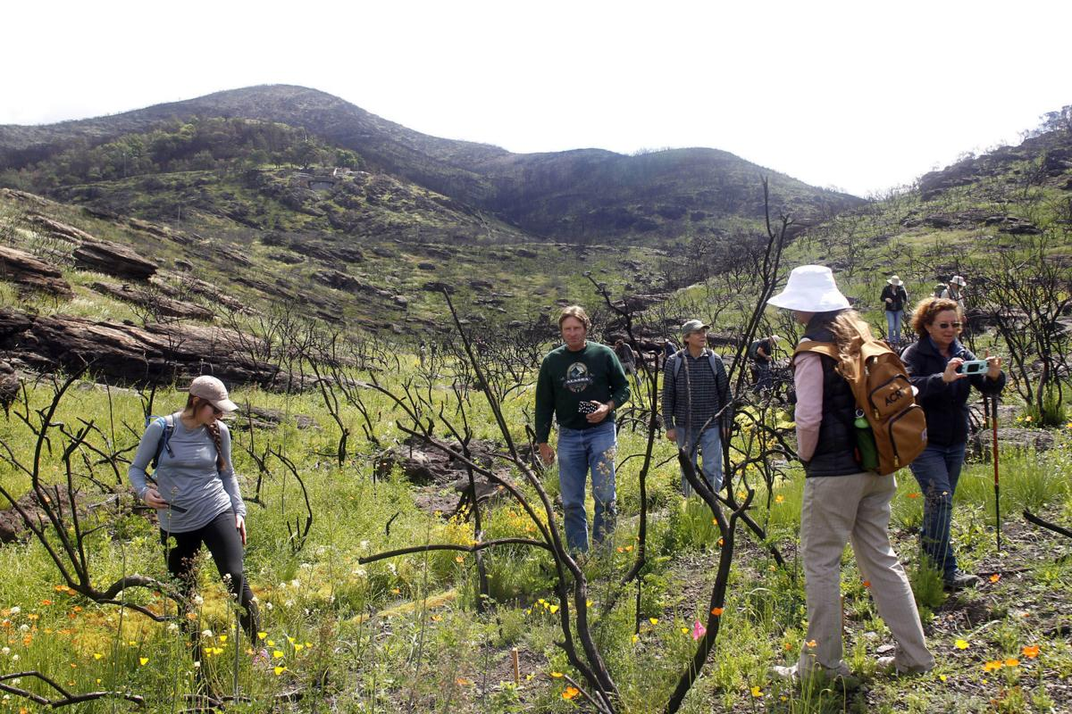 Foote Preserve Land Trust
