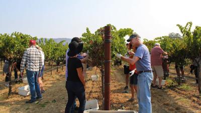Hands on Harvest - Picking
