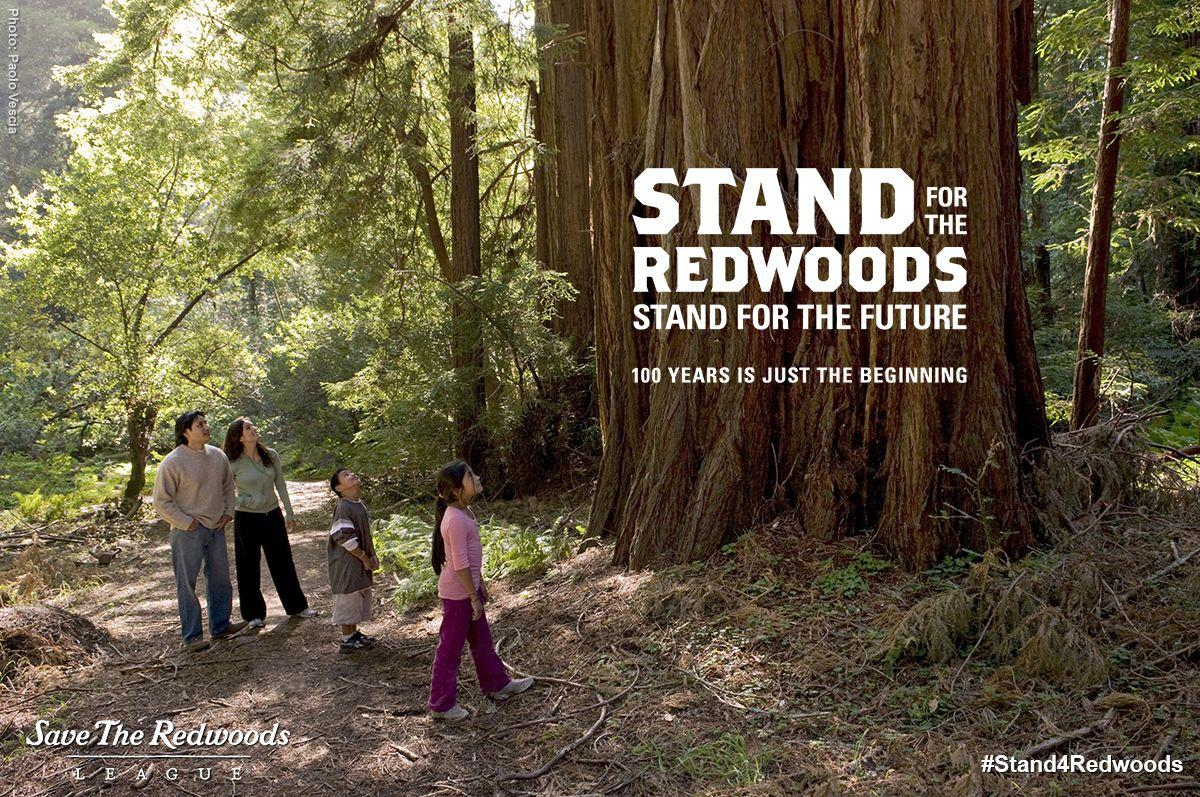 """""""Into the Redwoods"""""""