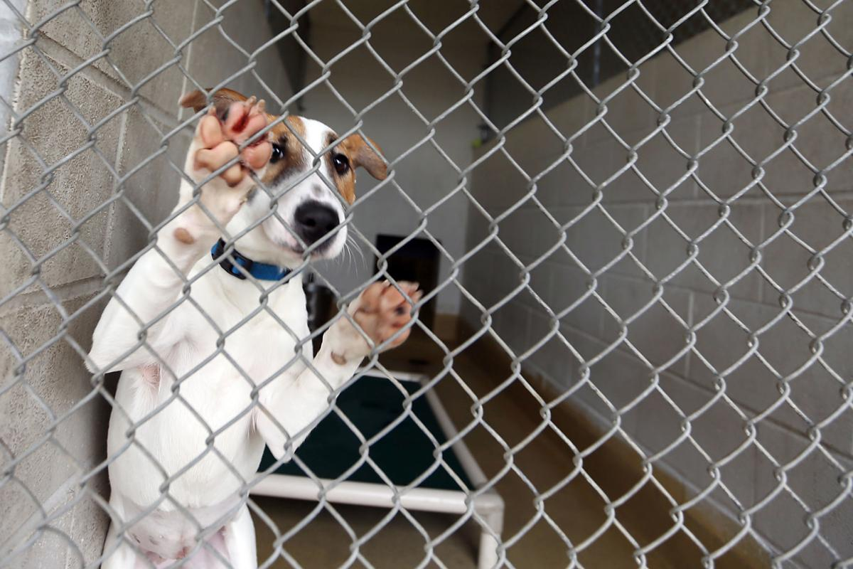 Napa County Animal Shelter
