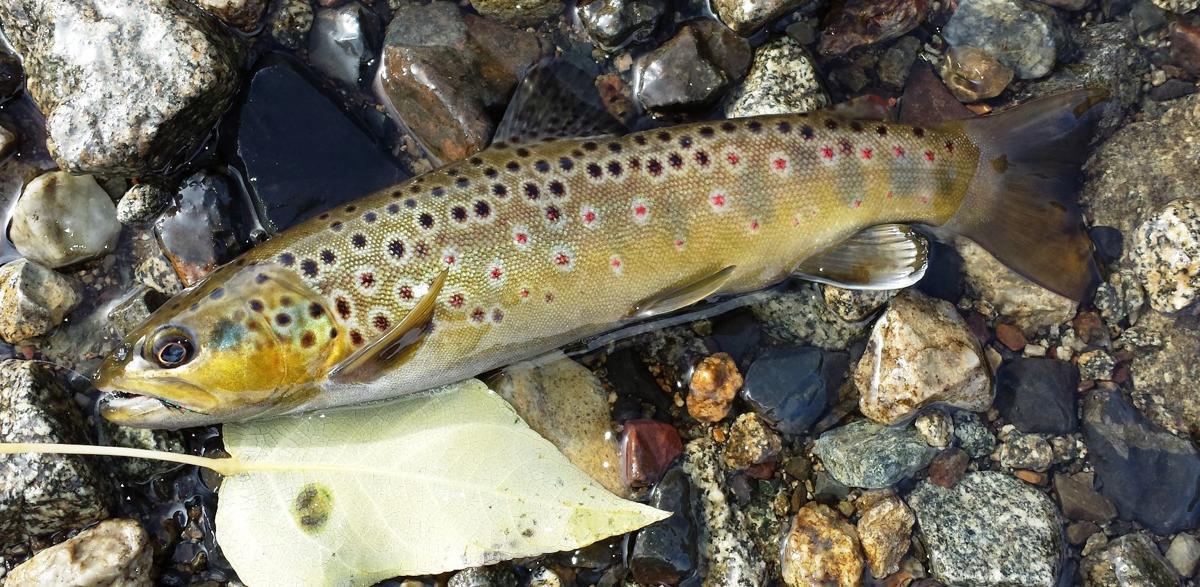 Napa Valley Fishing Report