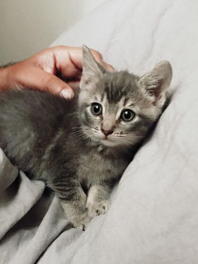 Adopt a Pet | Mr. Pearl