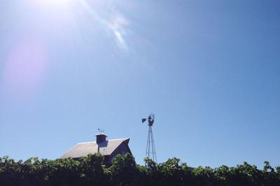 Photo: Sun over Carneros