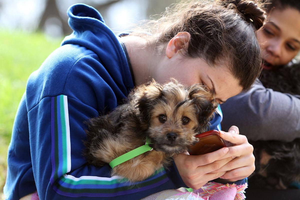 Free pet clinic in American Canyon