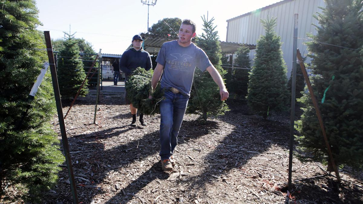 Christmas Tree Lots.Supplies Tight But Christmas Tree Lots Open In Napa County