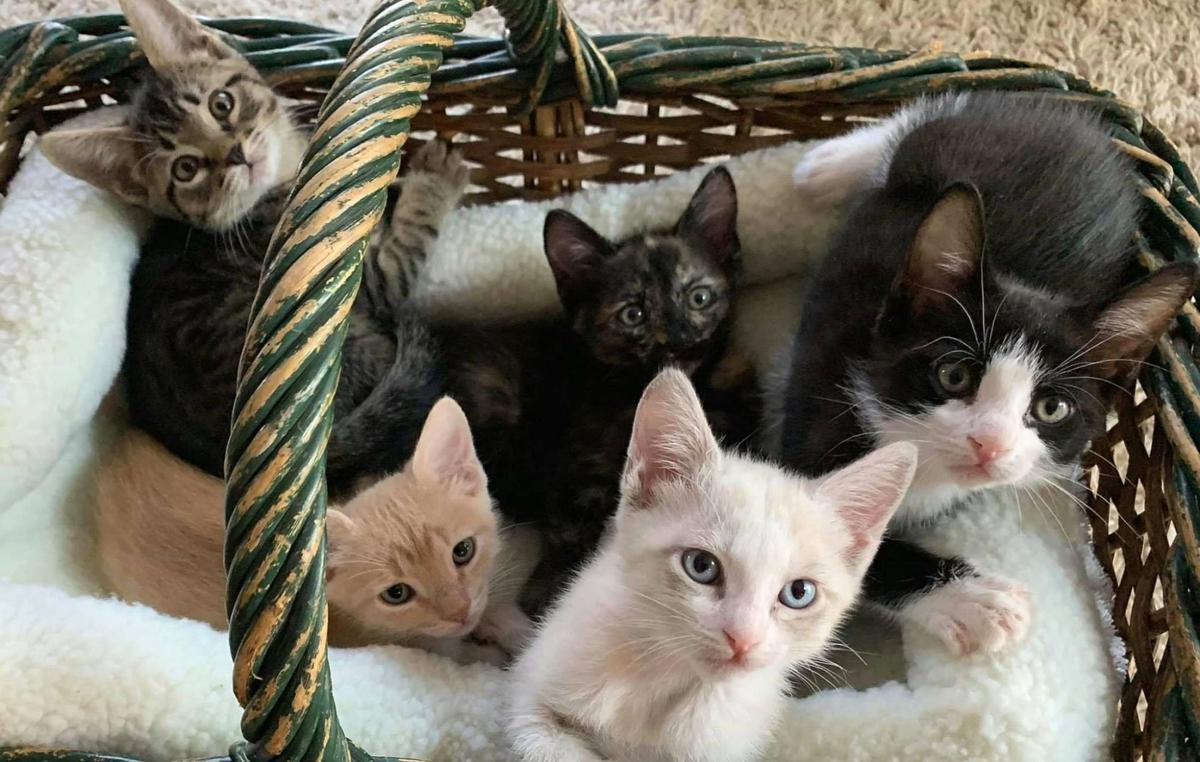 Adopt a Pet | Pasta kittens