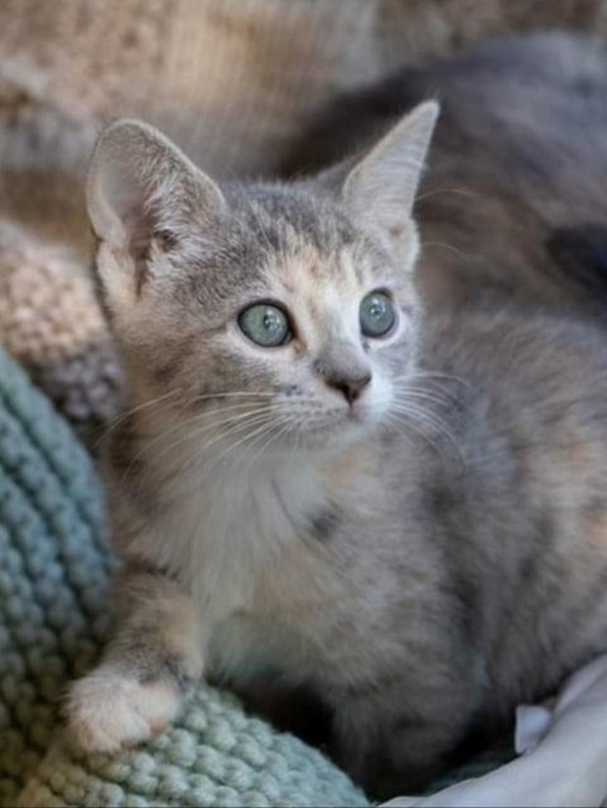Adopt a Pet | Belle Star