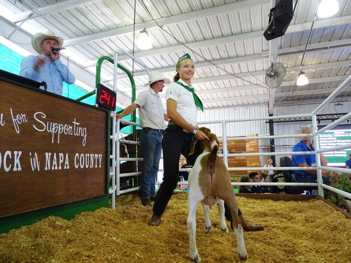 Junior Livestock Auction 2019