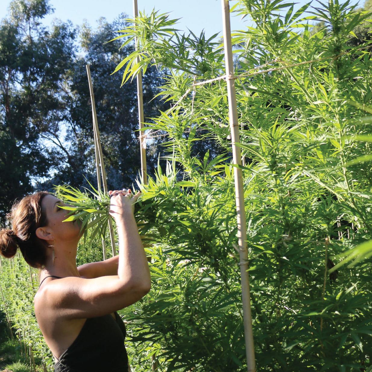 Biz Buzz: HerbaBuena launches cannabis delivery service