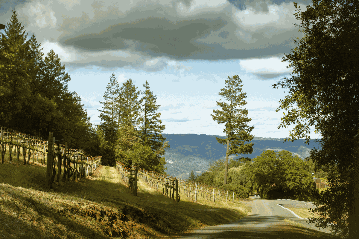 Smith-Madrone vineyards in Napa County