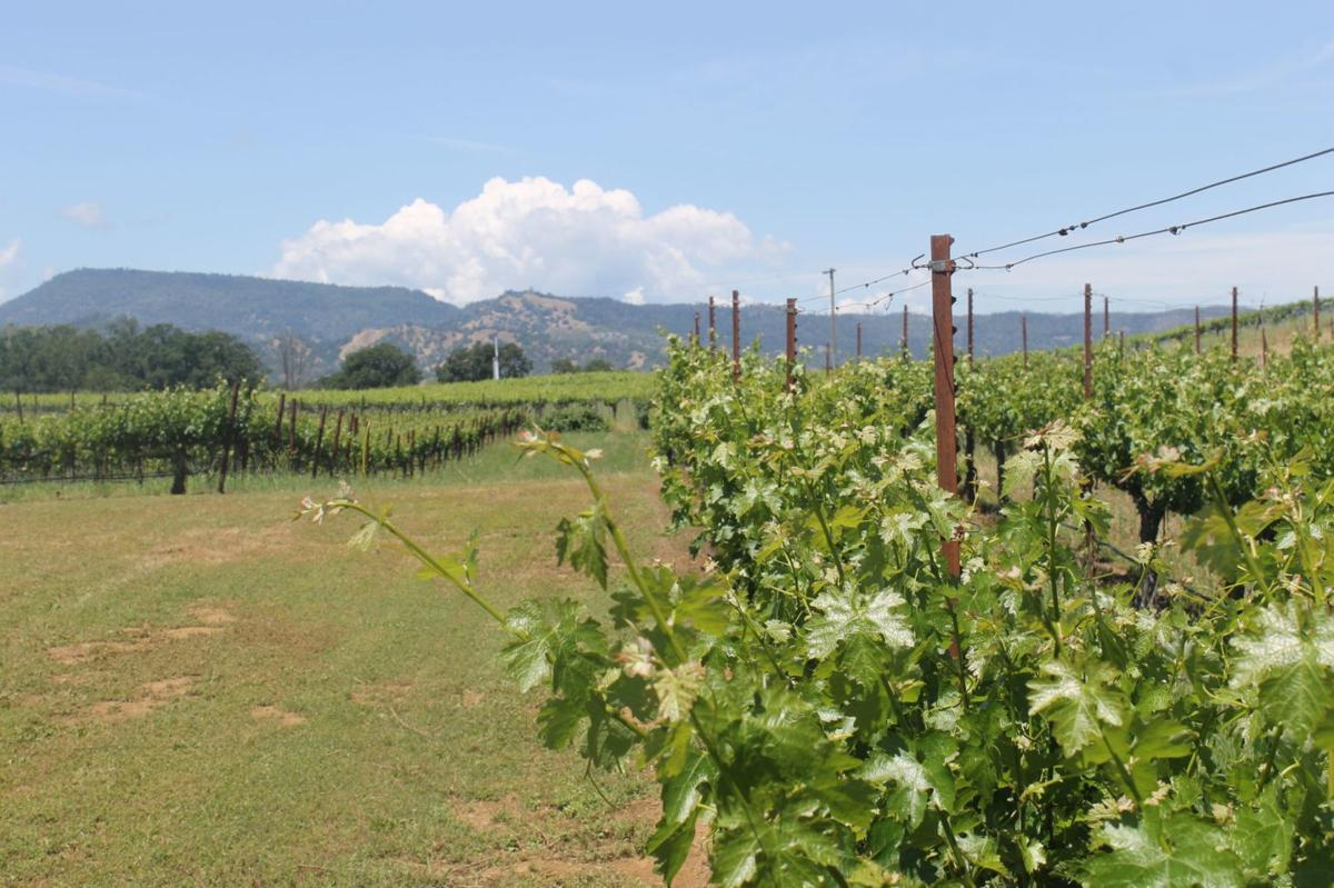 Vineyards at Pope Valley Winery