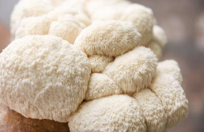 5 medicinal mushrooms that could supercharge your health