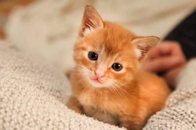 Adopt a Pet | Bowie