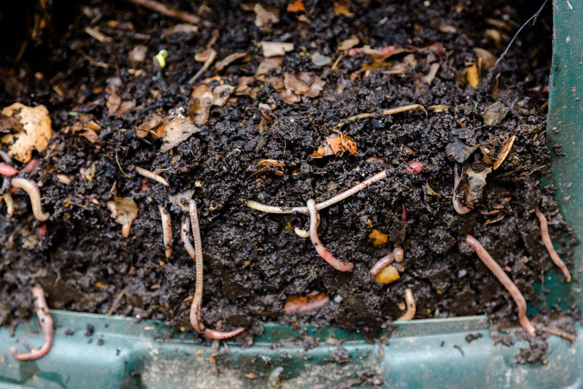 Master Gardeners: Worm your way in to composting