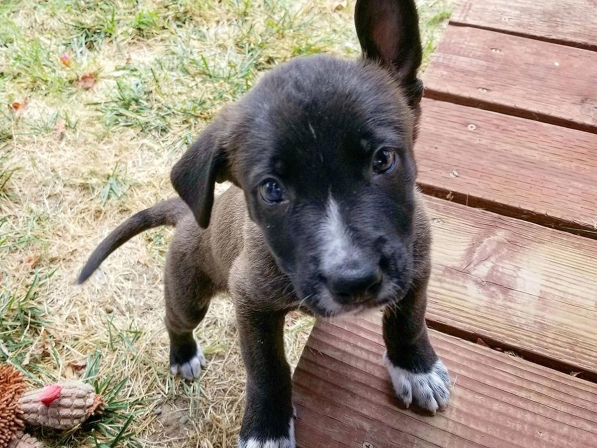 Adopt a Pet | Tahoe