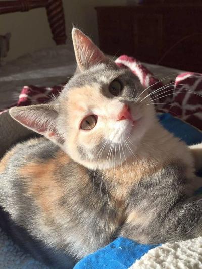 Pet of the Week: Precious