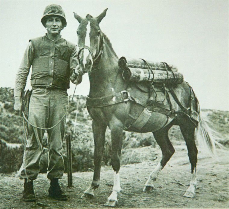 The Forgotten War: A four-legged corporal serves the Marines