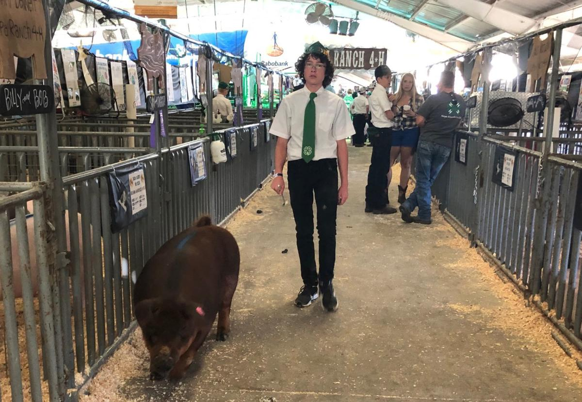 Napa Town and Country Fair, 2019 Livestock Auction