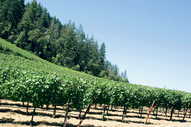 Cade Winery