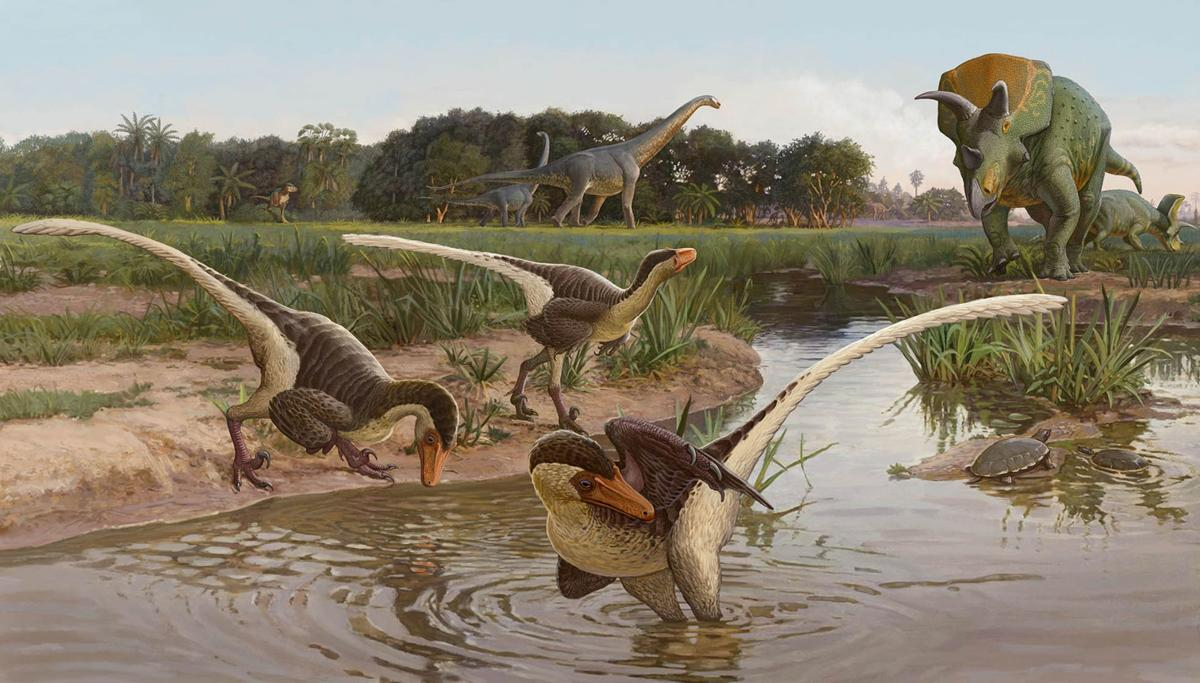 Newly discovered feathered dinosaur