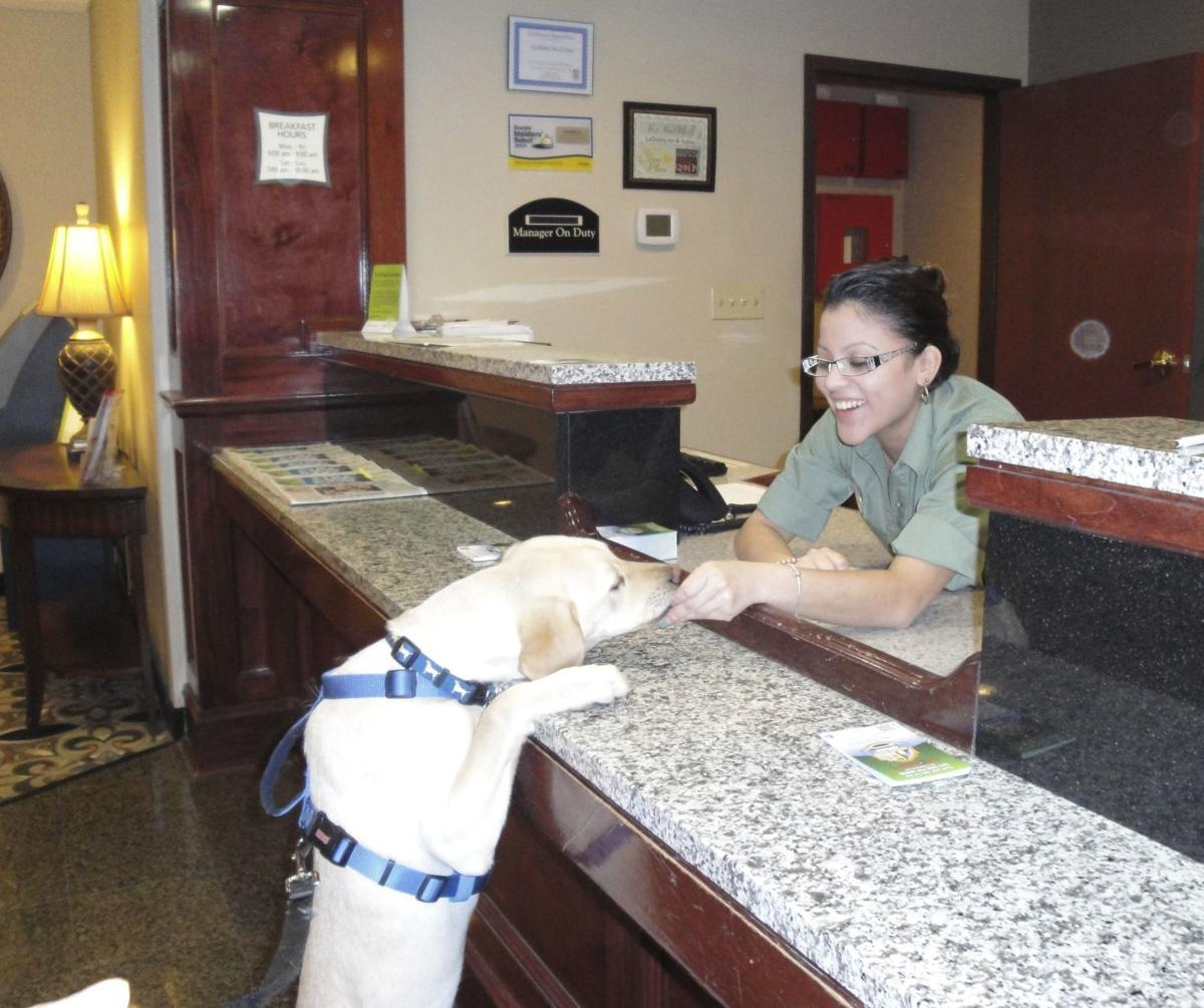 Planning a long road trip with your pet?  Top reasons to secure pet friendly accommodations before you hit the road (image)