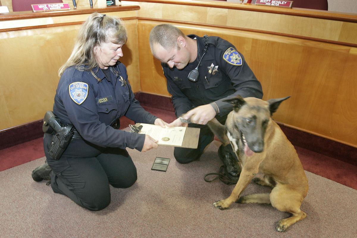 Rocky the Police Dog