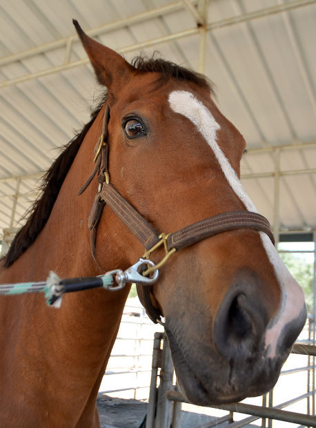 Farrier Matthew Frederick of Precision Horseshoeing 2