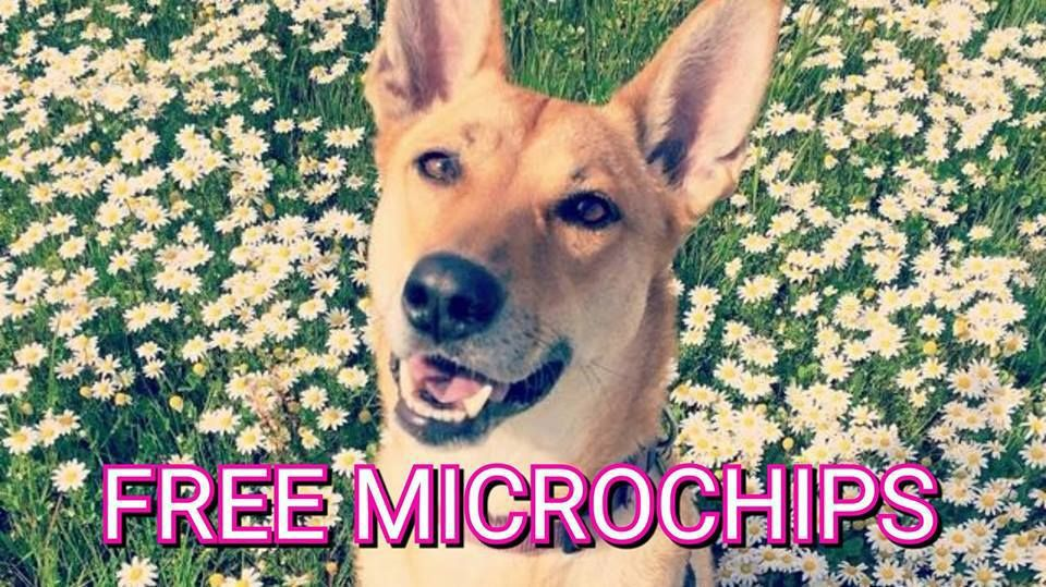 WCAL offers free microchipping