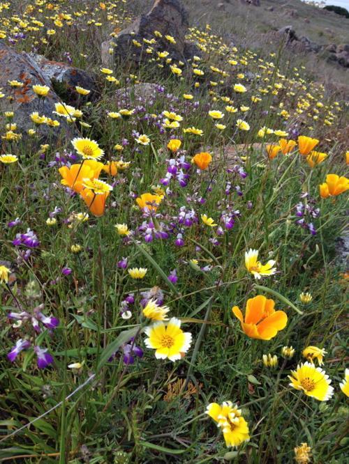 Landtrust native blooms