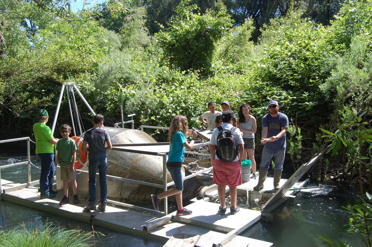 Napa River fish trap (copy)