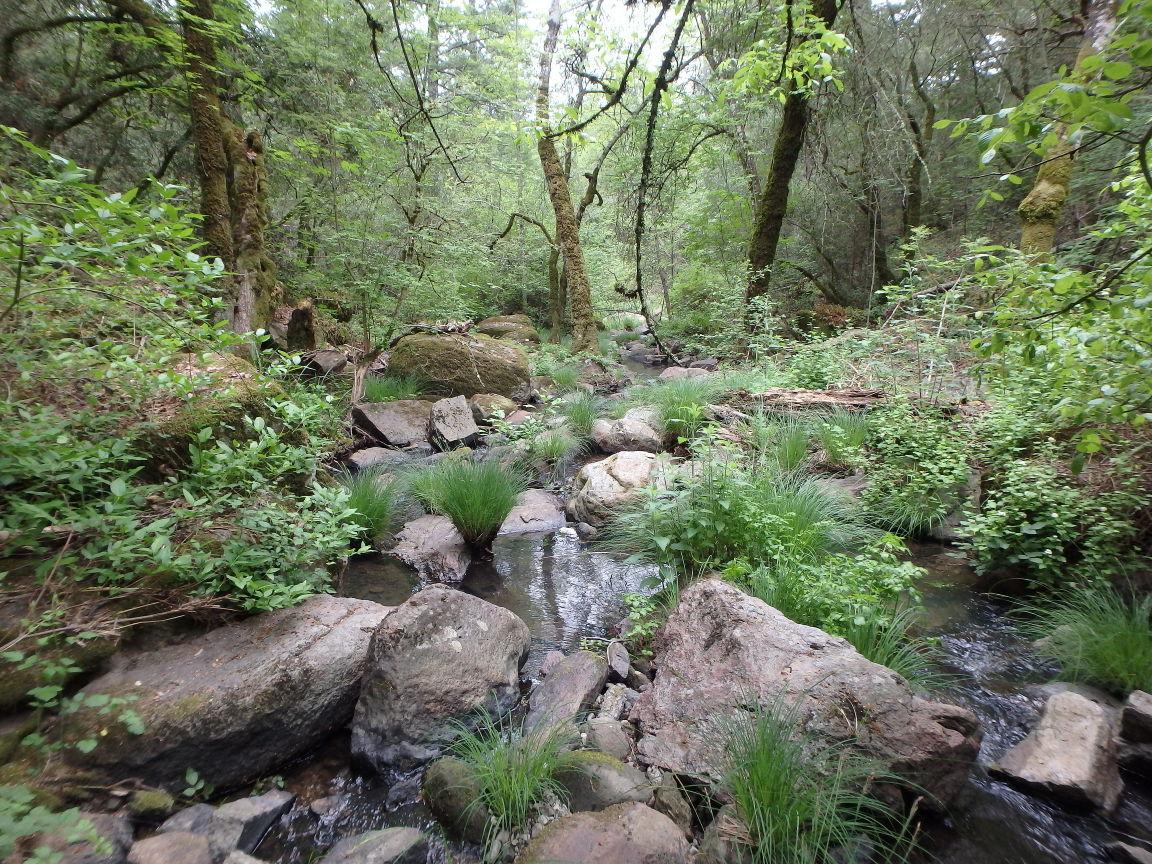 Conn Creek