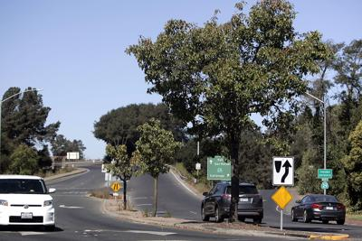 Roundabout Trees
