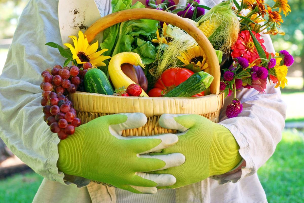 Basket of Garden Vegetables