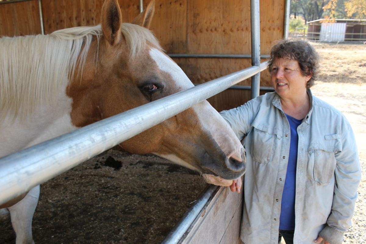Valley Fire aid and volunteering extends to animals, too