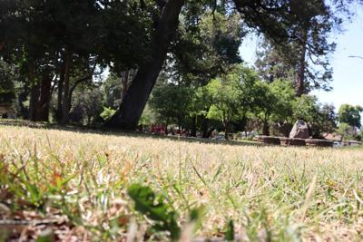 Grass at Fuller Park