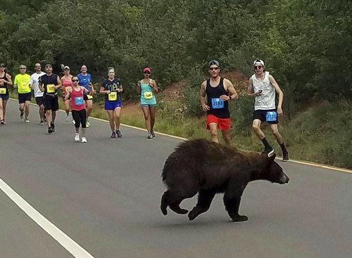 That's no normal runner: Bear crosses through Colorado race
