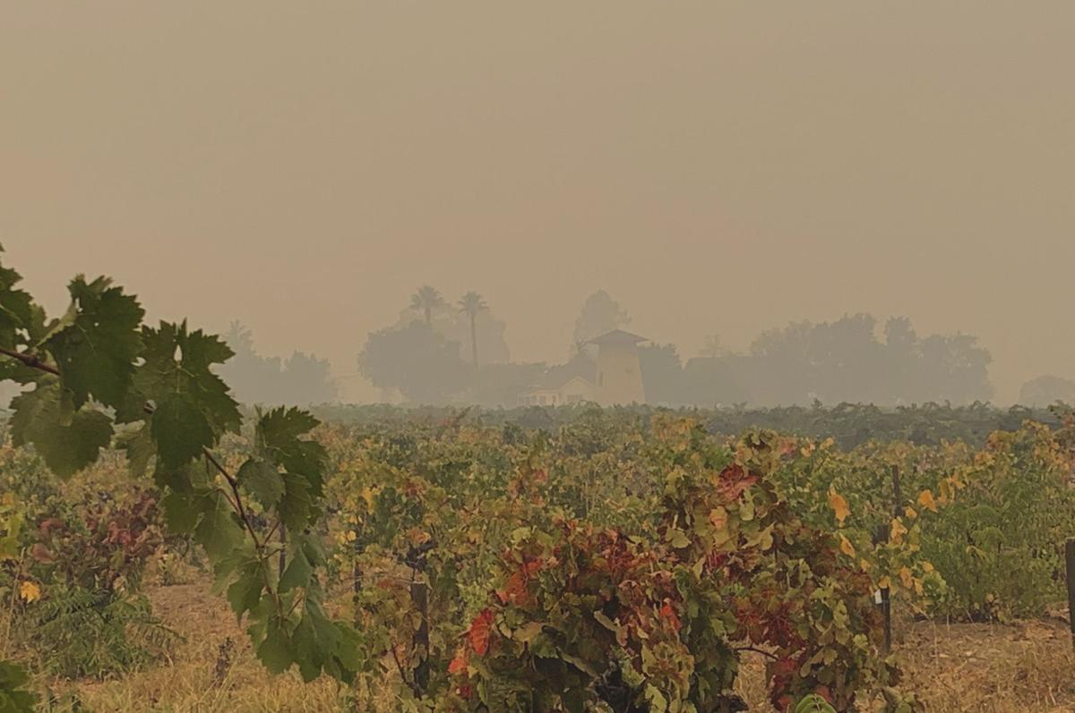 Smoke over vineyard behind St. Helena Public Library
