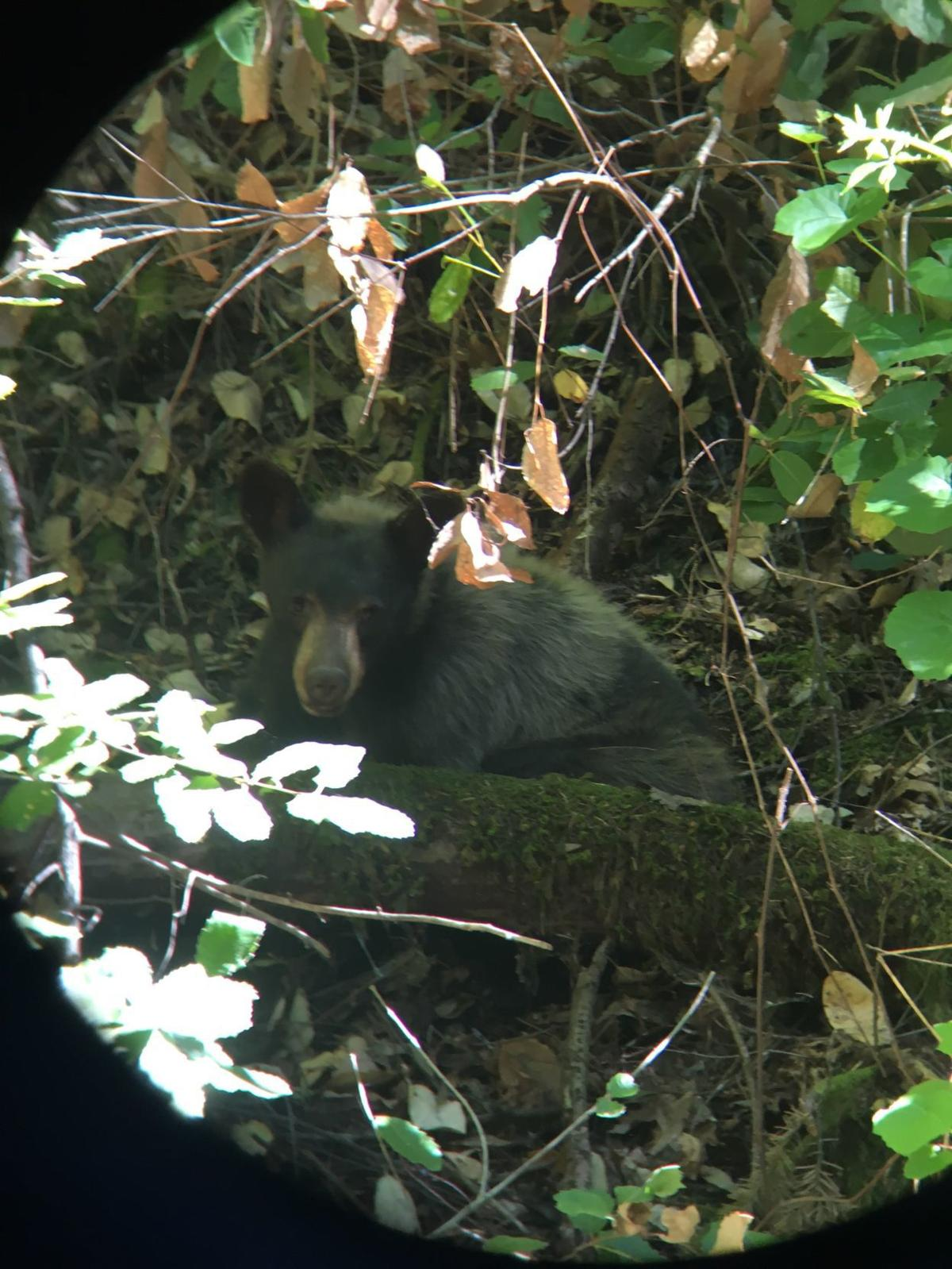 CHP: Black bear involved in wreck along Highway 29 in northern Napa County