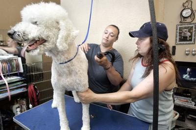 Pets threatened by a hot and noisy Fourth