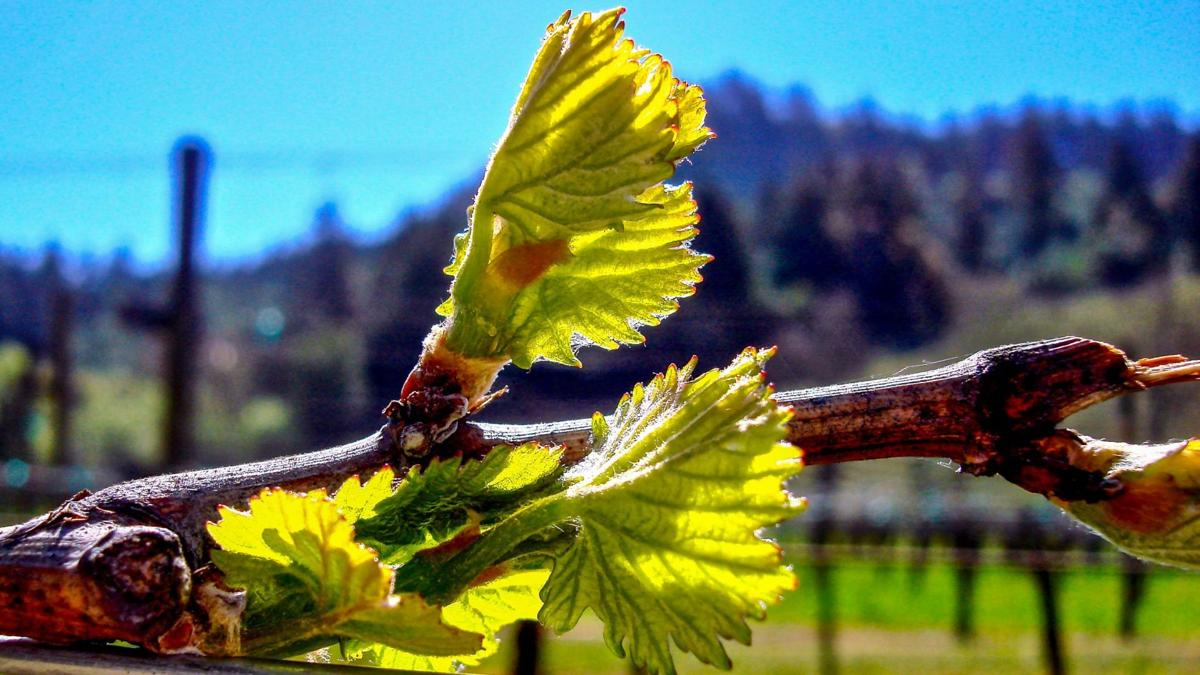 Love Letter to Napa County