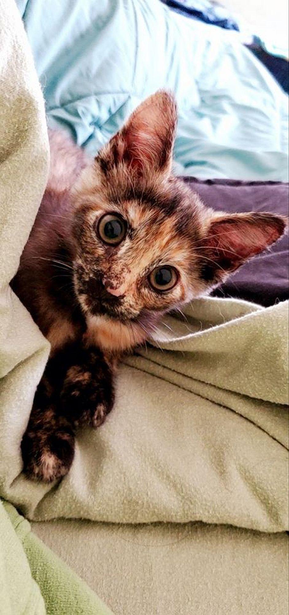 Adopt a Pet | Raegan