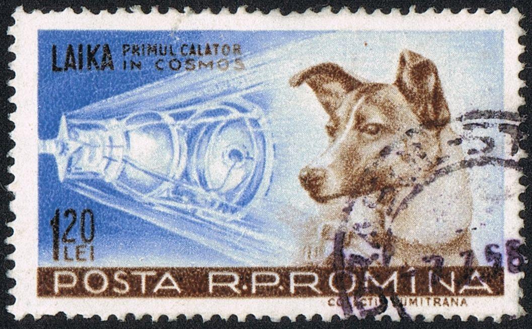 Laika, the space dog
