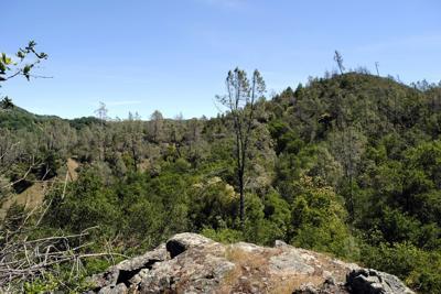 Heminway Forest